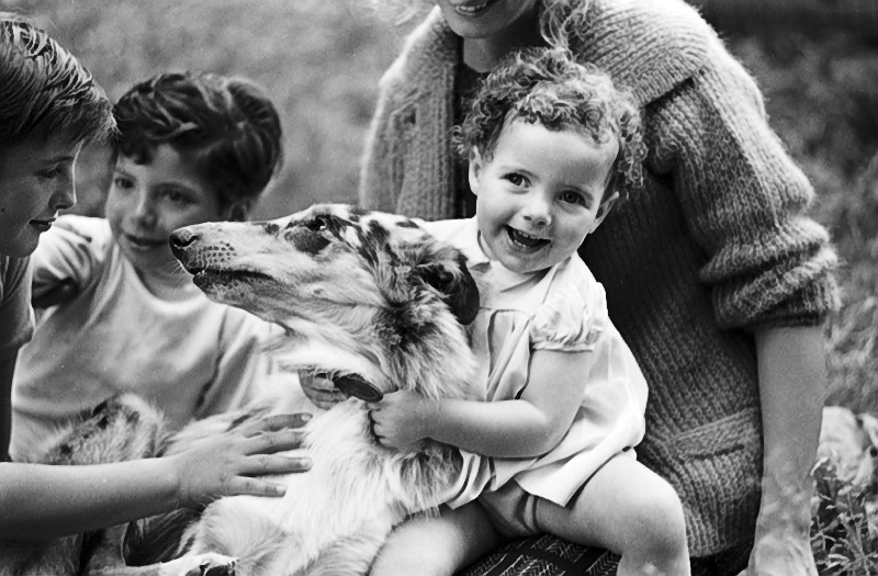 Sassy the lost collie, is reunited with her family in 1964. Image no. ASC10646.